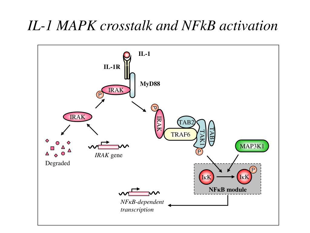 IL-1 MAPK crosstalk and NFkB activation