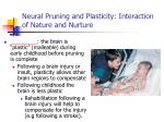 neural pruning and plasticity interaction of nature and nurture