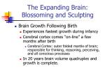the expanding brain blossoming and sculpting