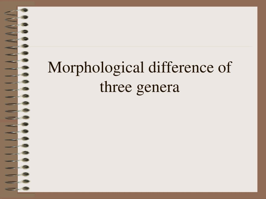 Morphological difference of three genera