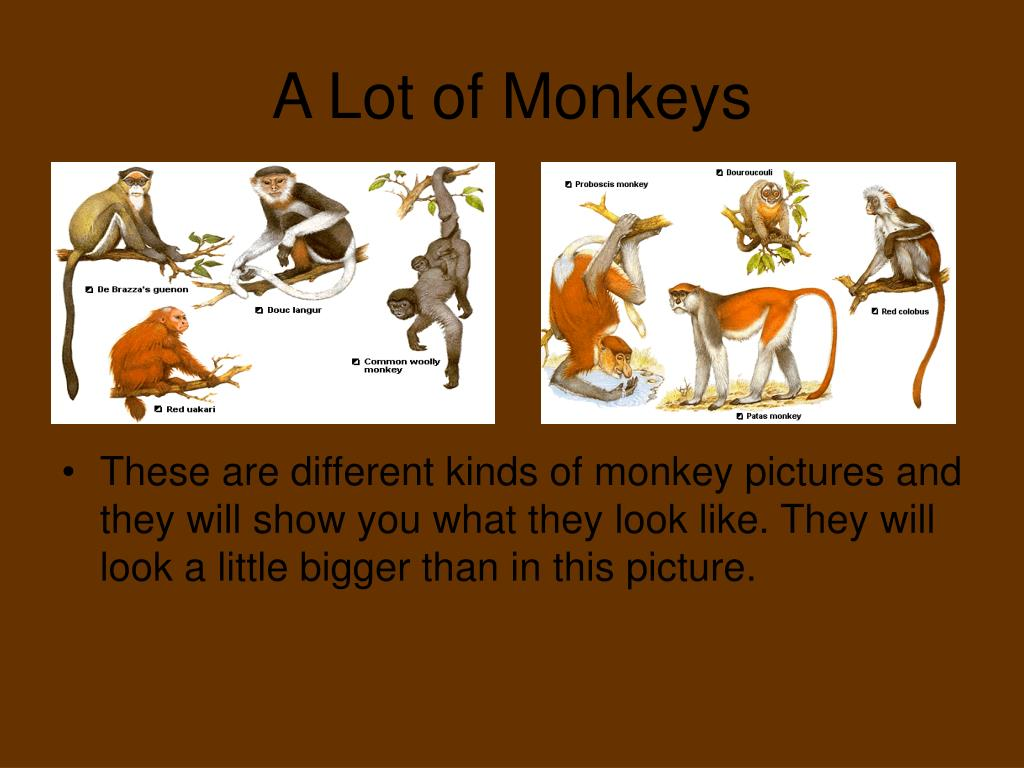 A Lot of Monkeys