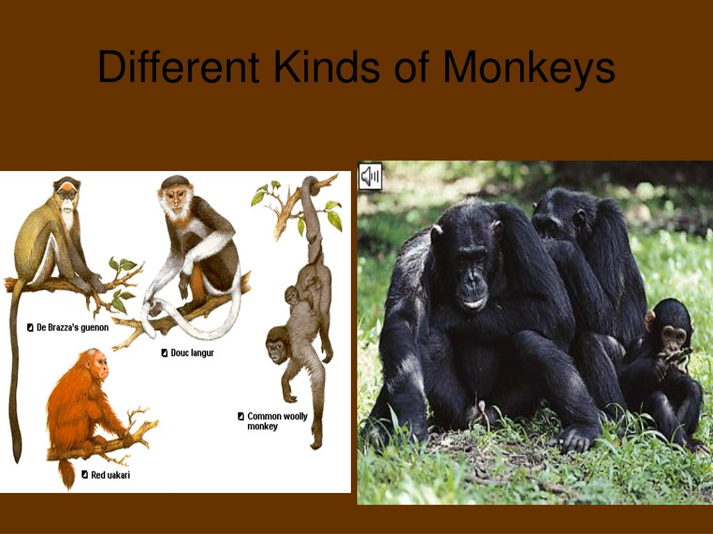 Different Kinds of Monkeys