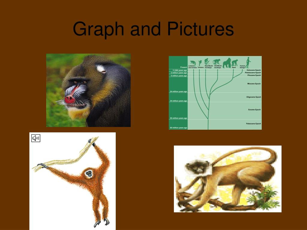 Graph and Pictures