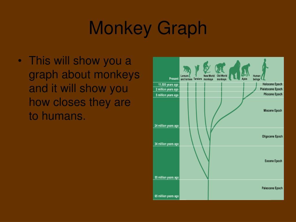 Monkey Graph