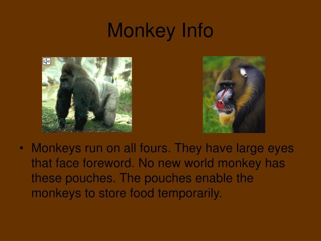 Monkey Info