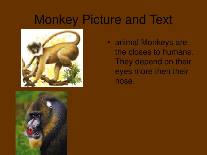 Monkey picture and text