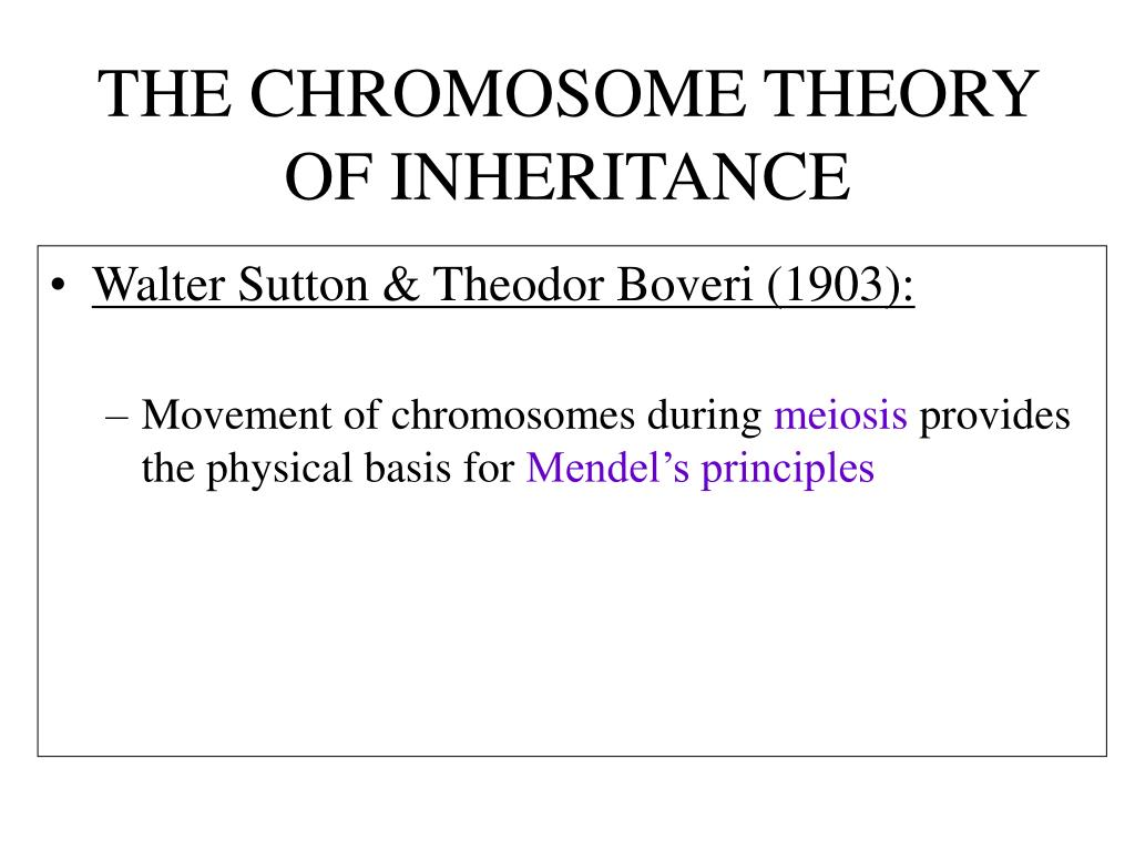 All Grade Worksheets Mendelian Genetics Worksheet Answers All – Chromosome Worksheet Answers
