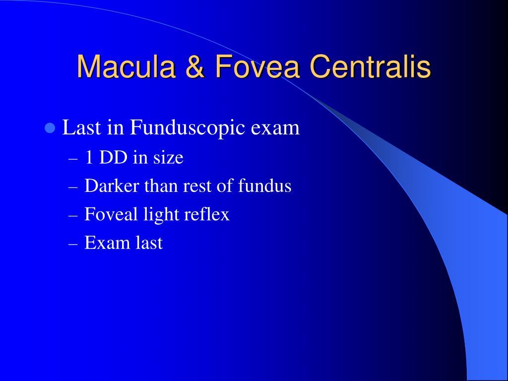 Macula & Fovea Centralis