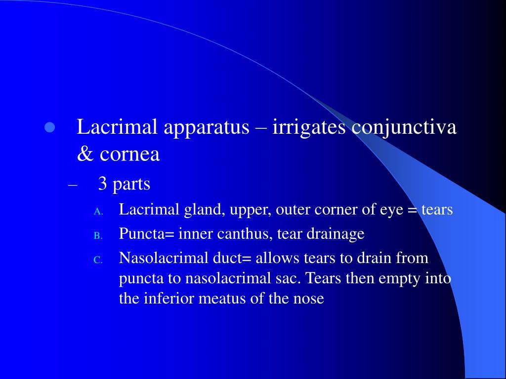 Lacrimal apparatus – irrigates conjunctiva & cornea