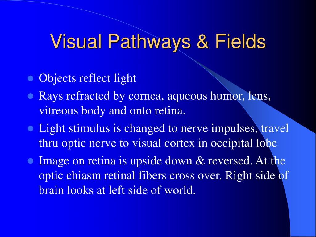 Visual Pathways & Fields