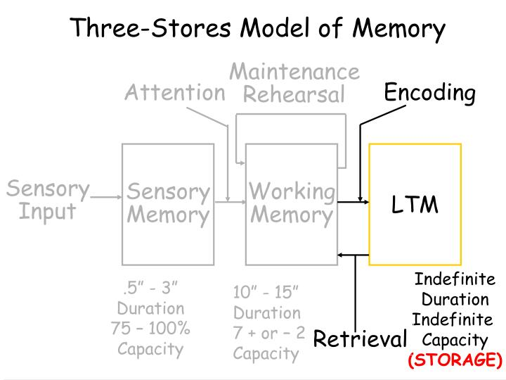 Three-Stores Model of Memory