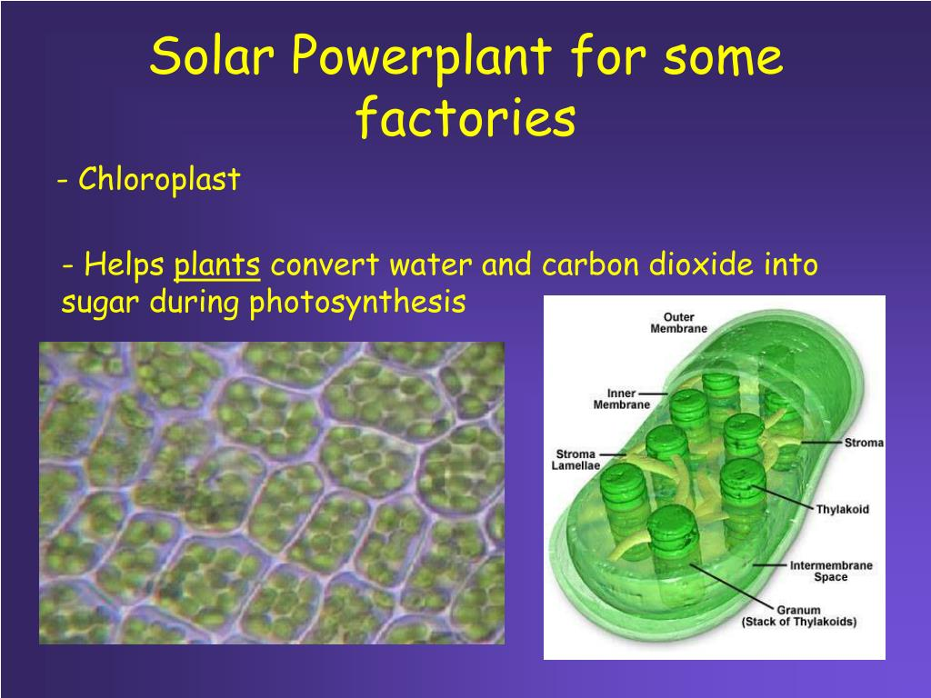 Solar Powerplant for some factories