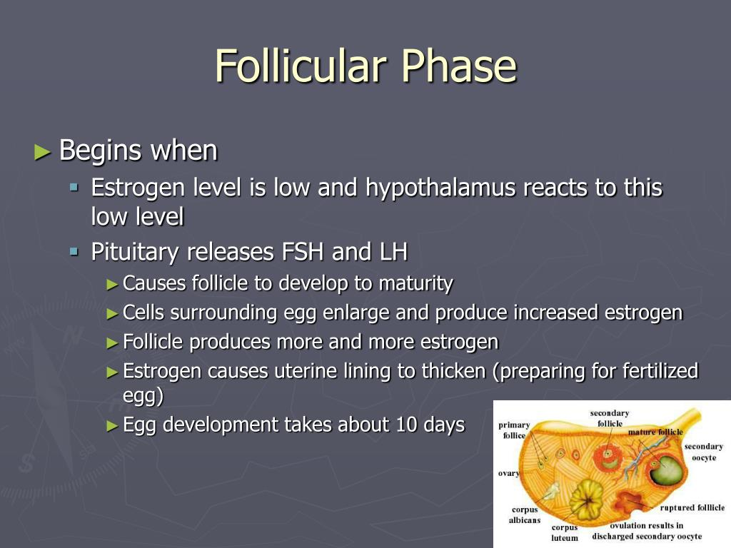 Hormone that causes follicle to mature