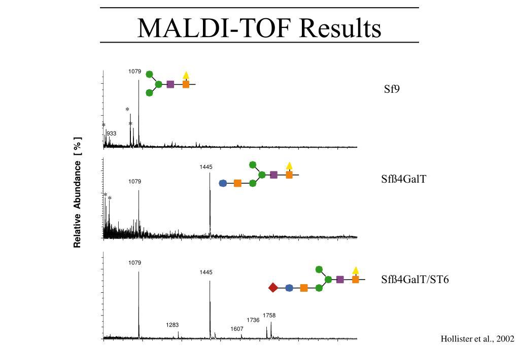 MALDI-TOF Results
