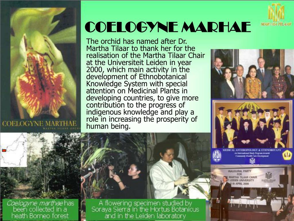 COELOGYNE MARHAE