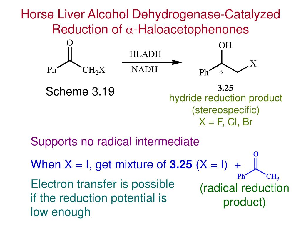 purification of alcohol dehydrogenase from bovine liver Adh isozymes from chinese hamster liver b g with bovine serum albumin classes of chinese hamster liver alcohol dehydrogenase isozymes by.