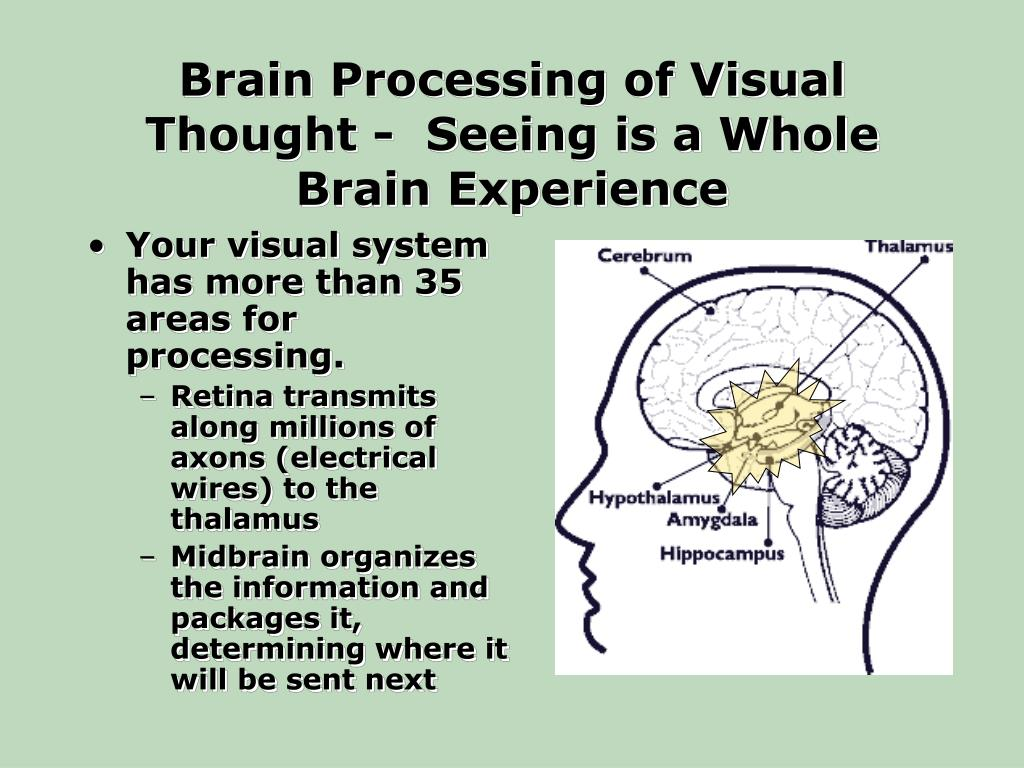 Brain Processing of Visual Thought -