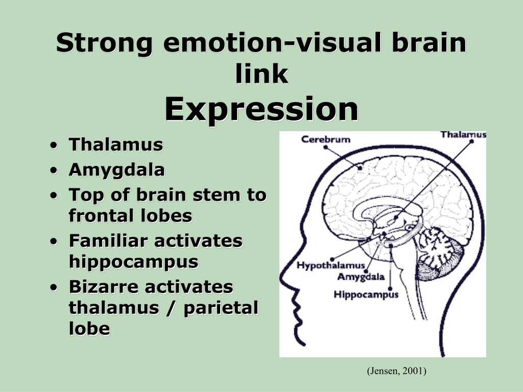 Strong emotion-visual brain link