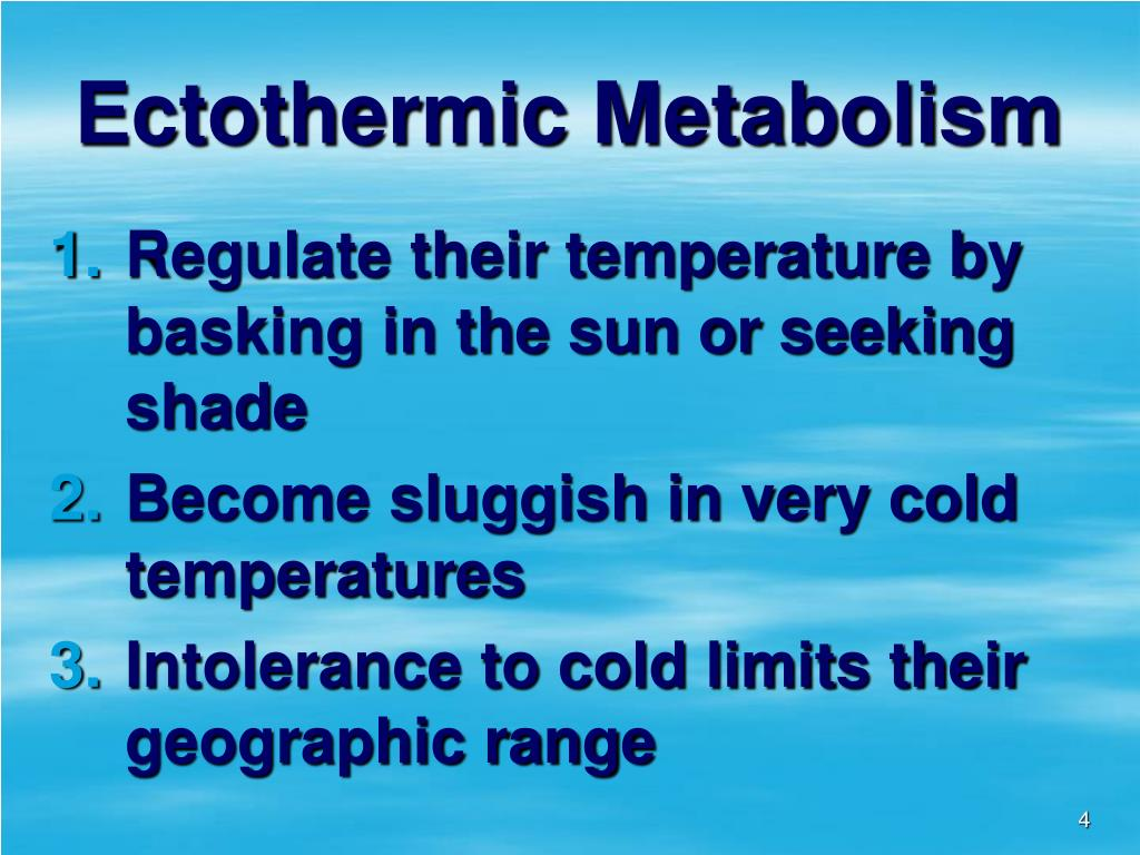 Ectothermic Metabolism