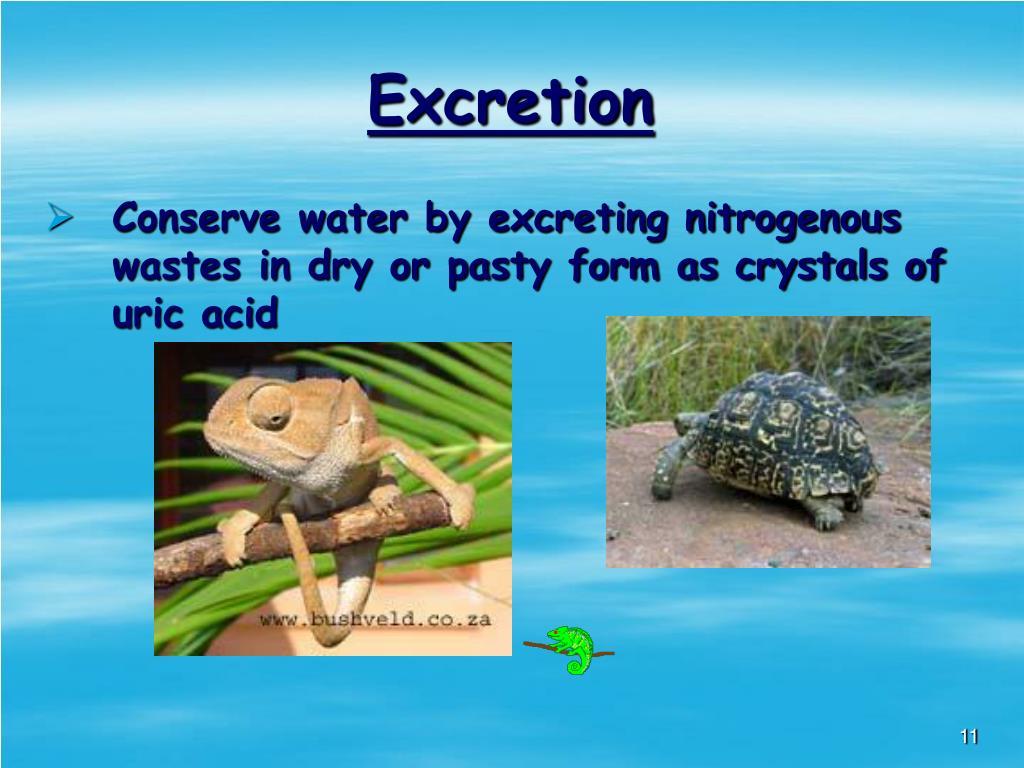 Excretion