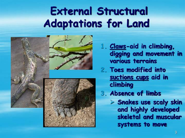 External structural adaptations for land l.jpg