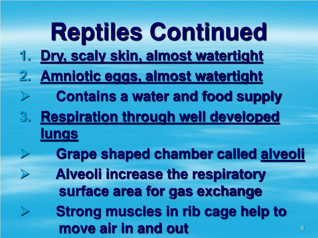 Reptiles Continued