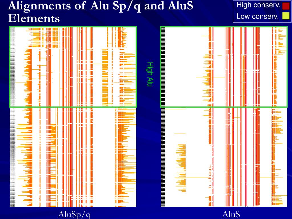 Alignments of Alu Sp/q and AluS Elements