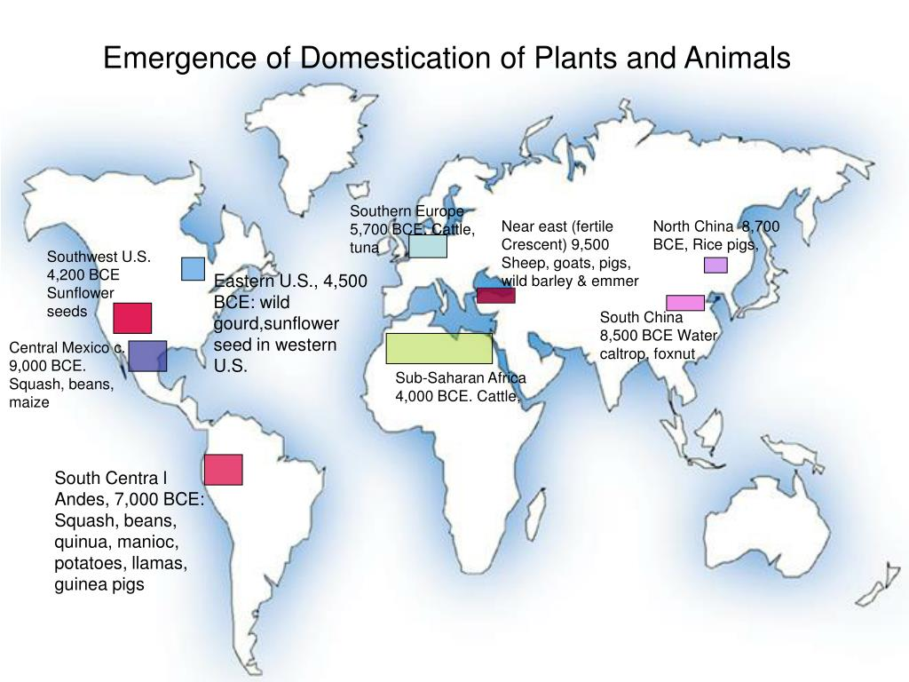Emergence of Domestication of Plants and Animals