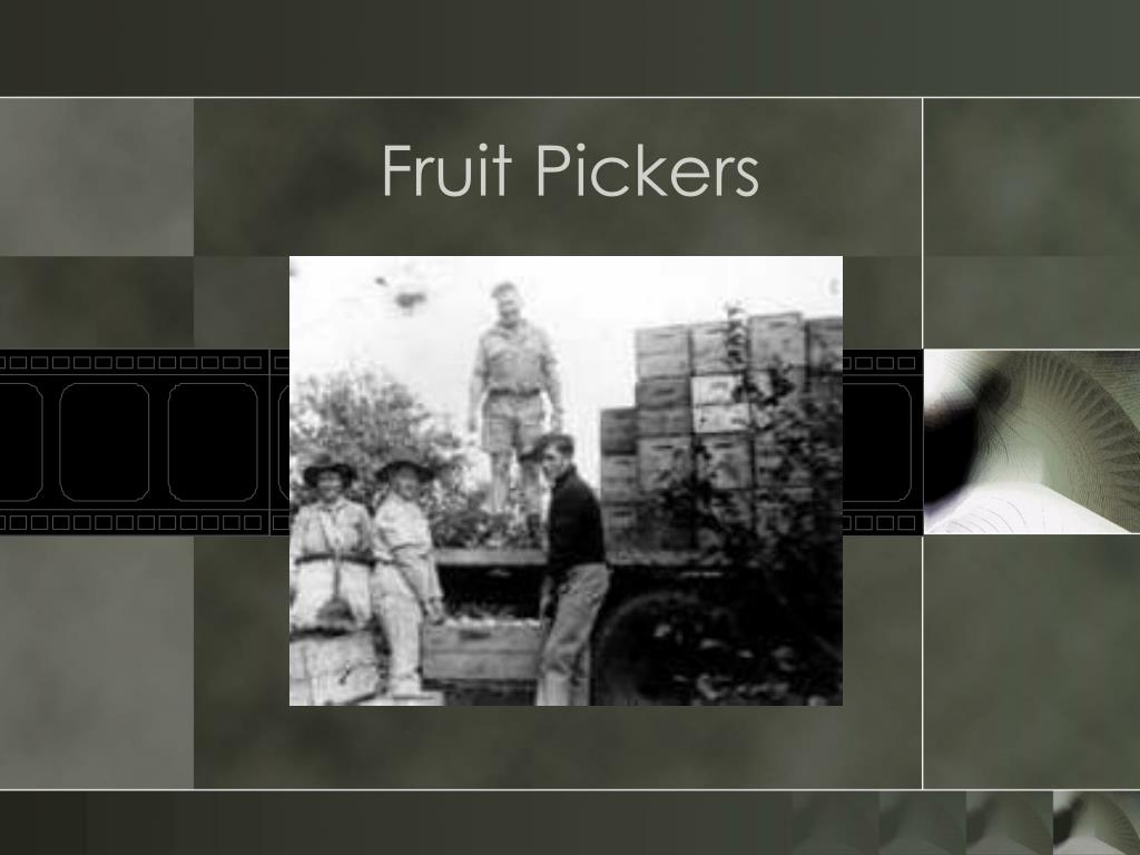 Fruit Pickers