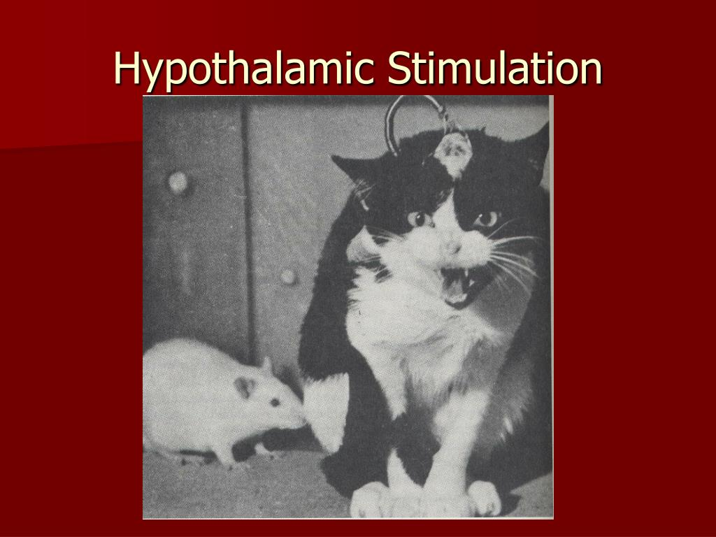 Hypothalamic Stimulation