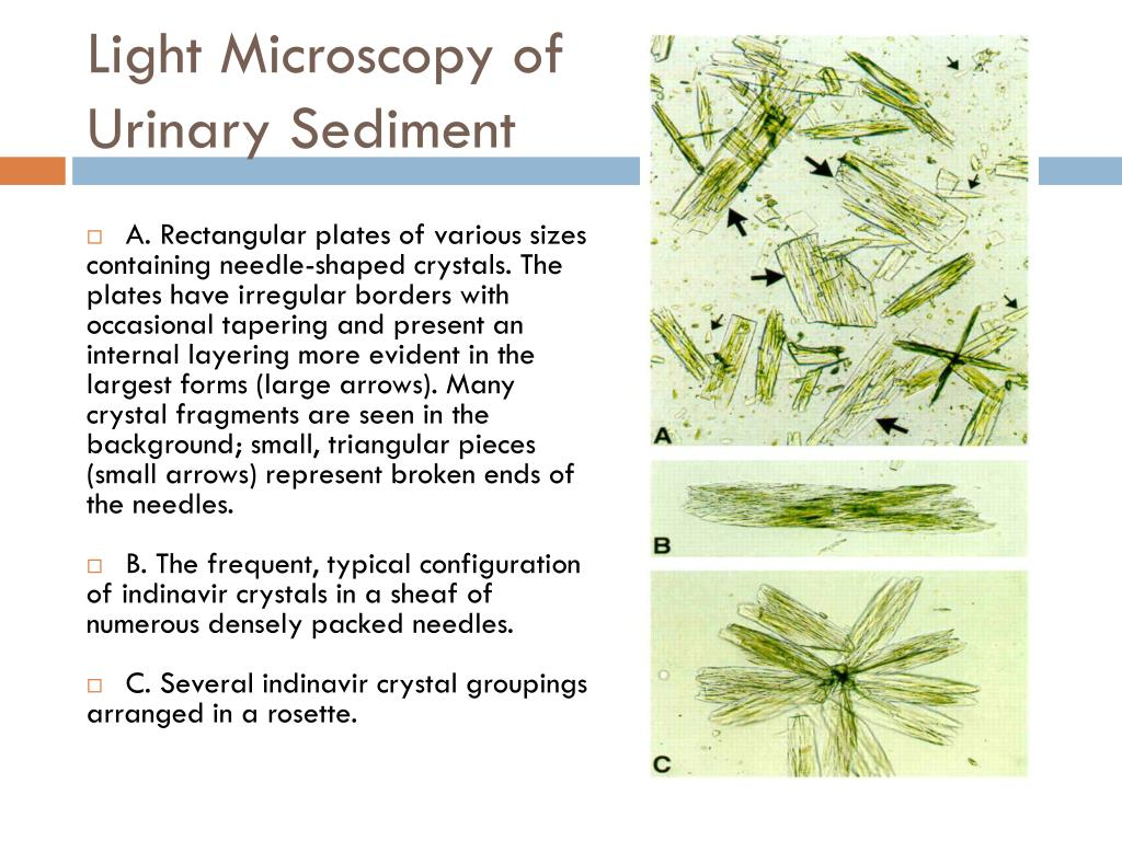 Light Microscopy of