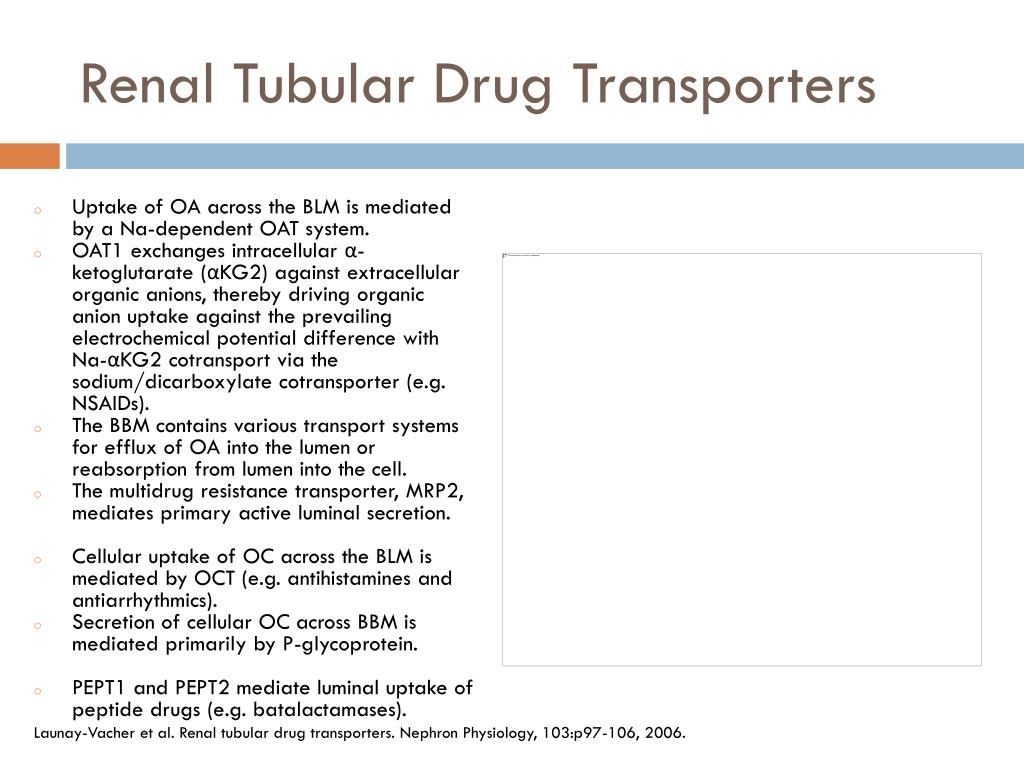 Renal Tubular Drug Transporters