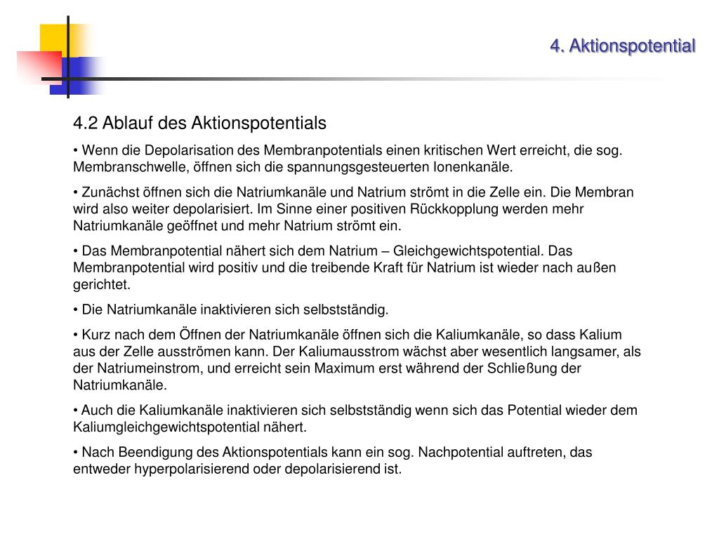 4. Aktionspotential