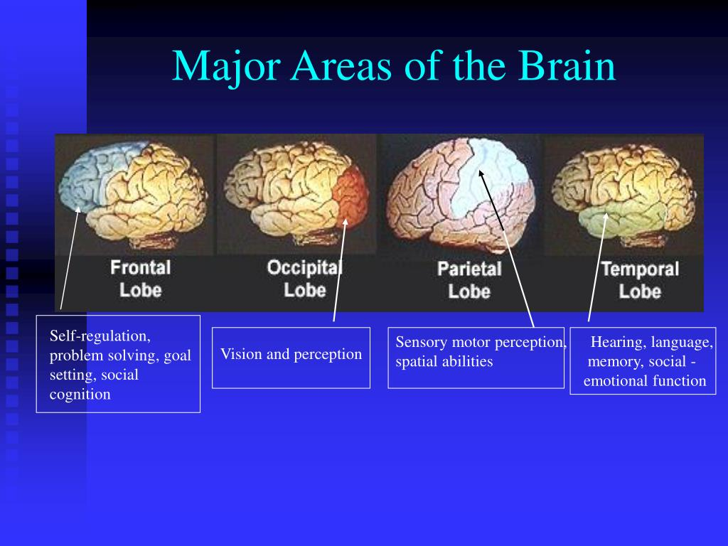 research paper on brain development in early childhood Recent research on the brain and early childhood development as research in neuroscience advances, our understanding of the brain and healthy brain development.
