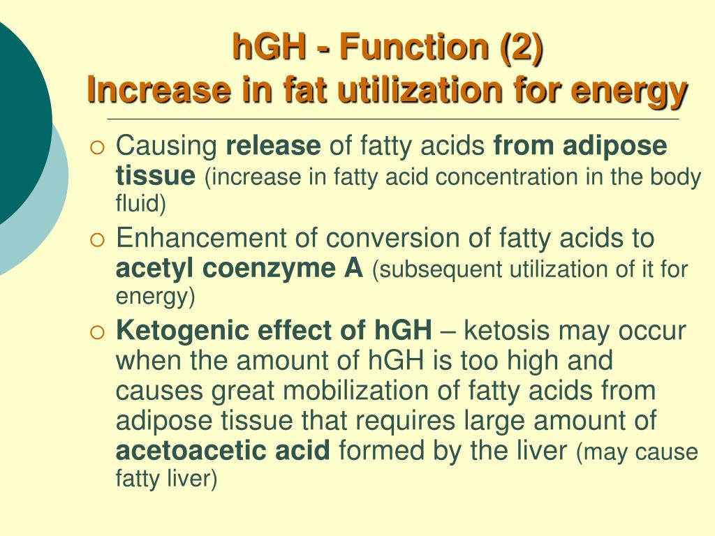 hGH - Function (2)