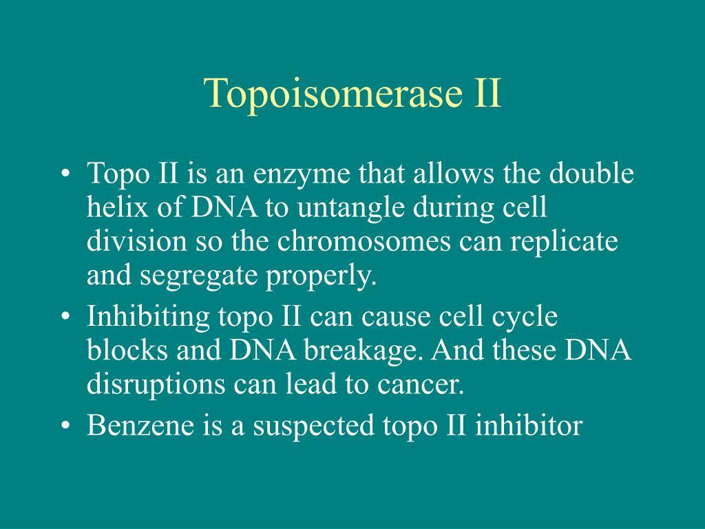 Topoisomerase II