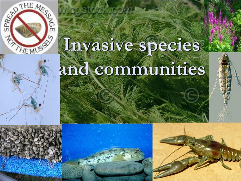 Invasive species and communities