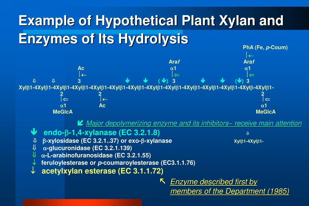 Example of Hypothetical Plant Xylan and Enzymes of Its Hydrolysis