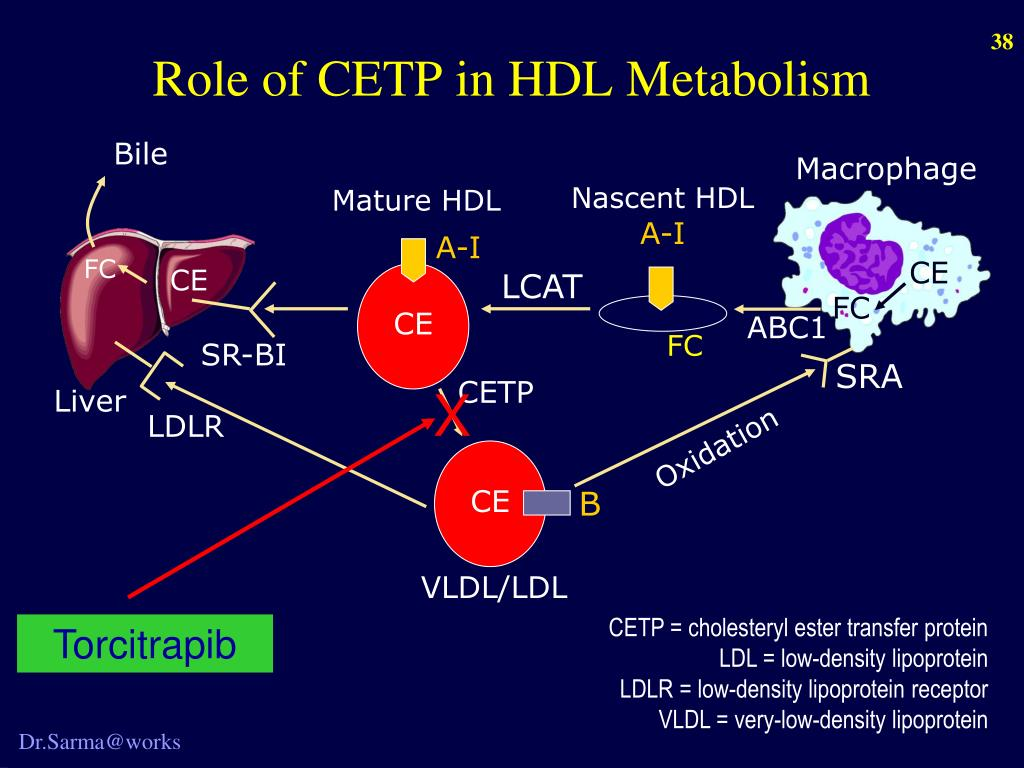 Role of CETP in HDL Metabolism