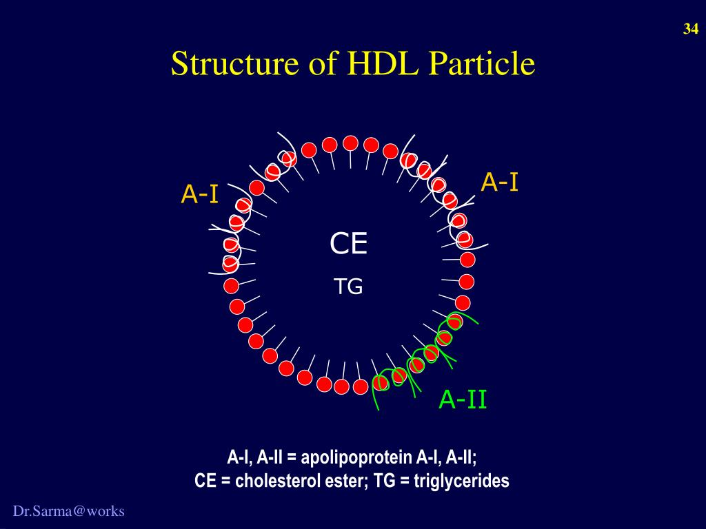 Structure of HDL Particle