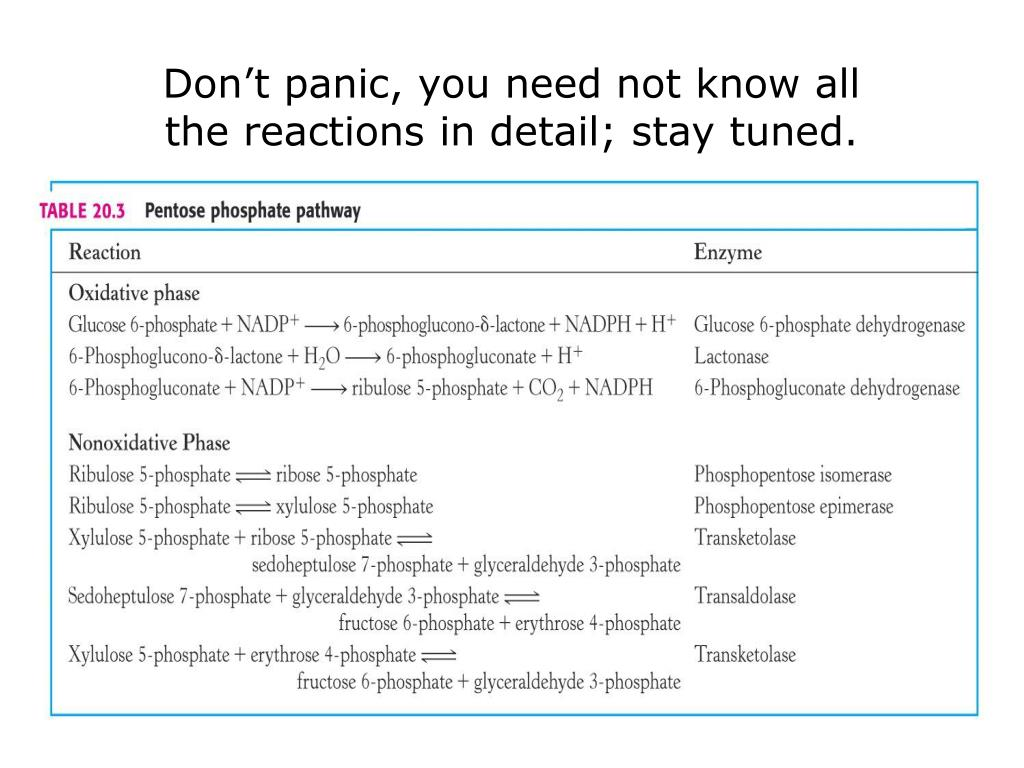 PPT - Lecture # 7 Pentose Phosphate Pathway PowerPoint ...
