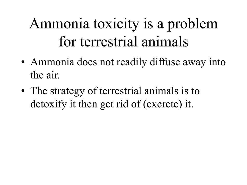 Ammonia toxicity is a problem for terrestrial animals