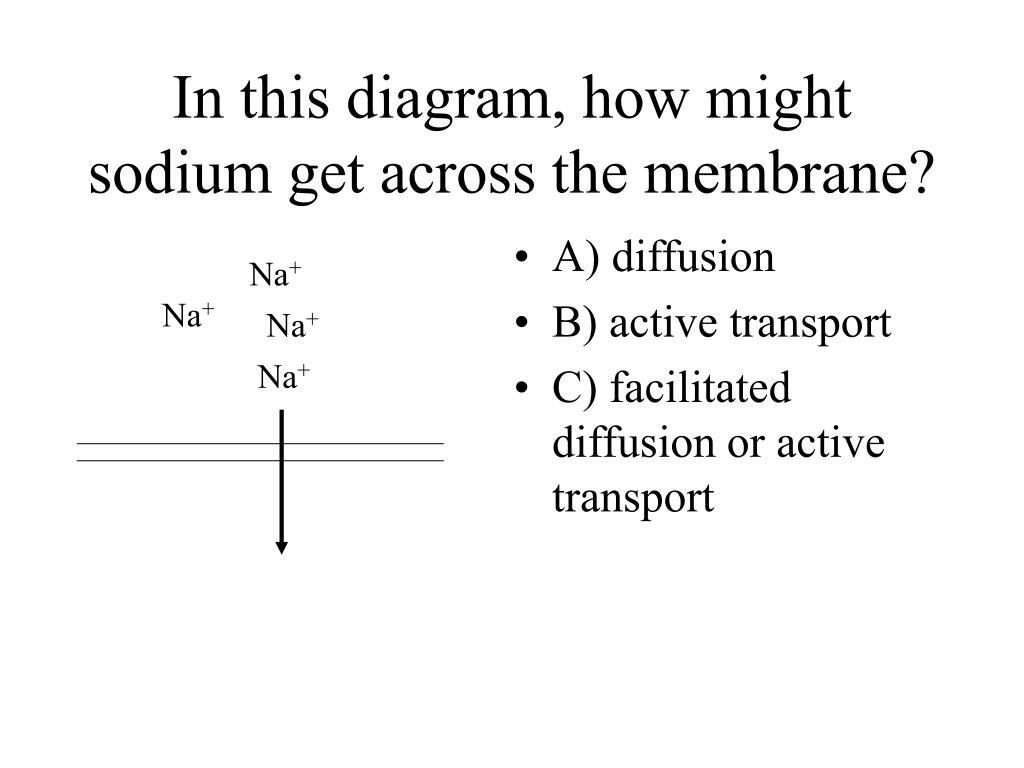 In this diagram, how might sodium get across the membrane?