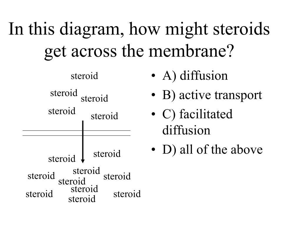 In this diagram, how might steroids get across the membrane?