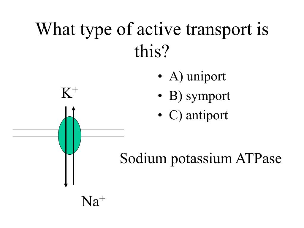 What type of active transport is this?