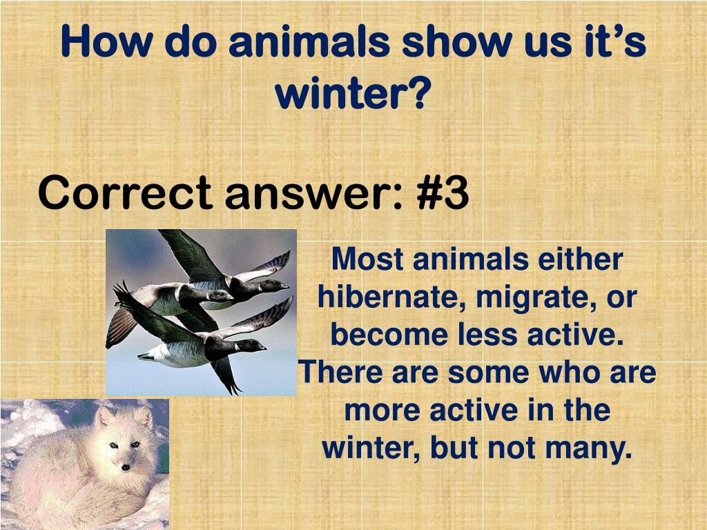How do animals show us it's winter?