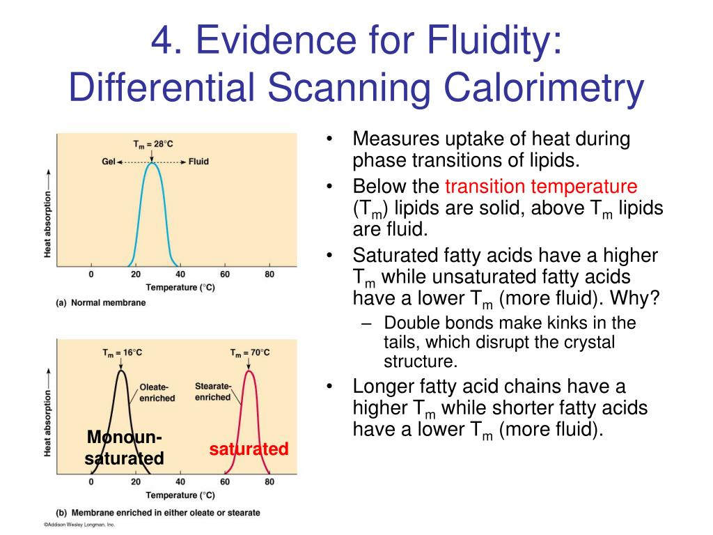 4. Evidence for Fluidity: