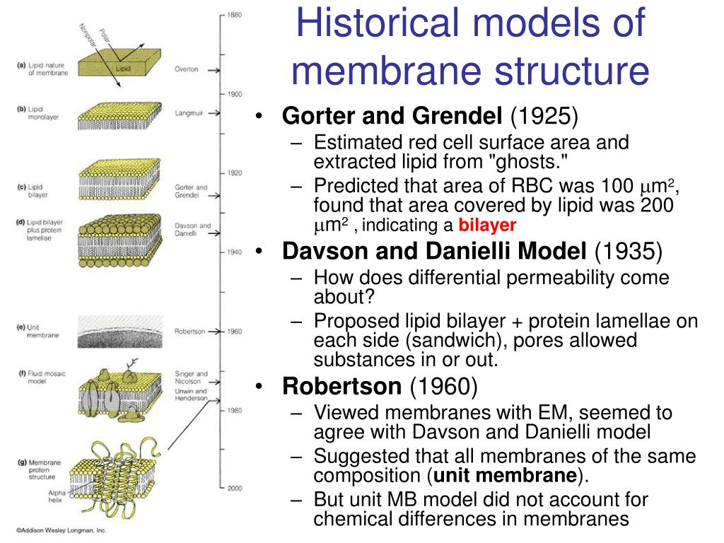 Historical models of membrane structure