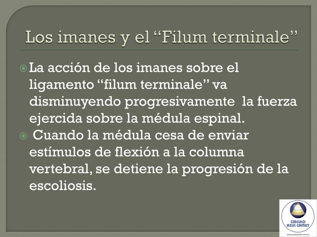 """Los imanes y el """"Filum terminale"""""""