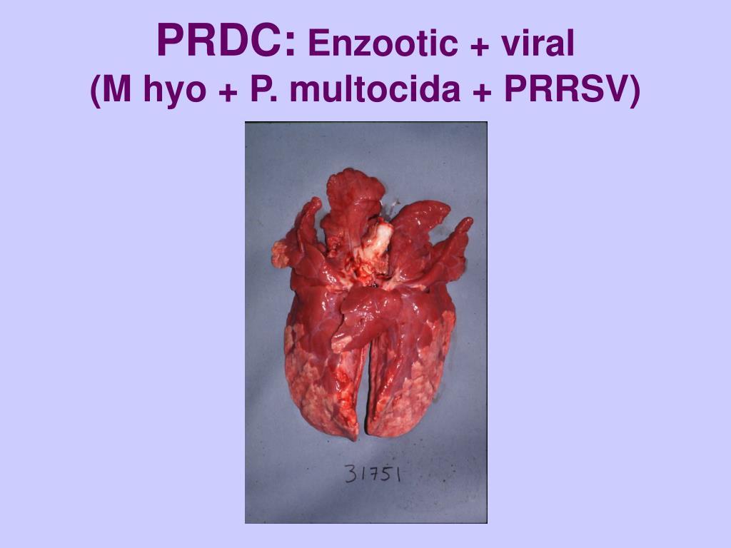 PRDC: